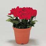 造花鉢 バラ 赤色 (935-11)