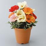 造花鉢 バラ ポピー (935-12A)