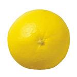 90mmグレープフルーツ DIFV7996 (55598***)