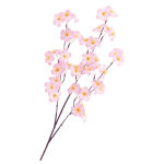 中枝 シルク桜 (1806)