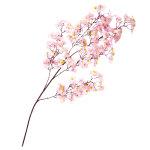 大枝 シルク桜 (1722)