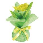 ミニミニポット菜の花 (12577)