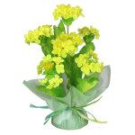 半球菜の花ポット (10159)