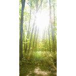 タペストリー木漏れ日 (14151)