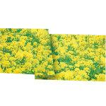 菜の花シート90cm巾 (1304)