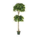 フィカスツリー (23023)