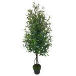 オリーブツリー (23078)