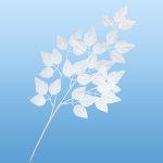 ホワイトリーフスプレイ (43052)