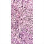 タペストリー 満開の桜 (965)