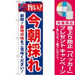 のぼり旗 旨い!今朝採れ (21689) [プレゼント付]