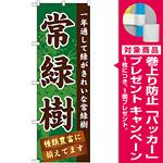 のぼり旗 表示:常緑樹 (GNB-1074) [プレゼント付]