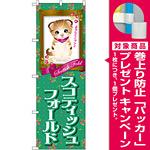のぼり旗 スコティッシュフォールド (GNB-2444) [プレゼント付]