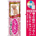 のぼり旗 トイプードル シャンパン 入荷 (GNB-2458) [プレゼント付]