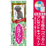 のぼり旗 トイプードル シルバーグレー 入荷 (GNB-2459) [プレゼント付]