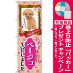 のぼり旗 トイプードル ベージュ 入荷 (GNB-2464) [プレゼント付]