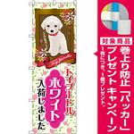 のぼり旗 トイプードル ホワイト 入荷 (GNB-2465) [プレゼント付]
