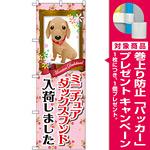のぼり旗 ミニチュアダックスフンド入荷 (GNB-2491) [プレゼント付]