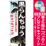 のぼり旗 黒らんちゅう (GNB-584) [プレゼント付]