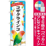 のぼり旗 コザクインコ (GNB-615) [プレゼント付]