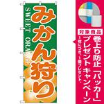 のぼり旗 みかん狩り (H-384) [プレゼント付]