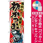 のぼり旗 初かつお 下段にカツオのイラスト(SNB-1481) [プレゼント付]