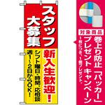 のぼり旗 (1287) スタッフ大募集新入生歓迎 [プレゼント付]