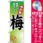 のぼり旗 (1374) 梅 [プレゼント付]