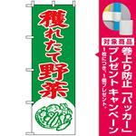 のぼり旗 (2247) 穫れたて野菜 [プレゼント付]