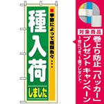 のぼり旗 (3250) 種入荷 [プレゼント付]