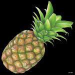 デコシール パイナップル サイズ:ビッグ W600×H600 (61880)