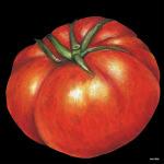 デコシール トマト サイズ:ビッグ W600×H600 (61886)