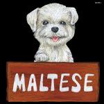 デコシール 犬 マルチーズ  サイズ:ビッグ W600×H600 (61913)