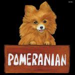 デコシール 犬 ポメラニアン サイズ:ビッグ W600×H600 (61914)