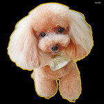 デコシール 犬 プードル (写真) サイズ:レギュラー W285×H285 (62005)