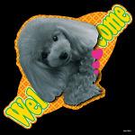 デコシール 犬 プードル ブラック (写真) サイズ:ビッグ W600×H600 (61942)