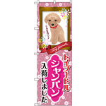 のぼり旗 トイプードル シャンパン 入荷 (GNB-2458)