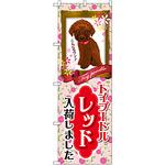のぼり旗 トイプードル レッド 入荷 (GNB-2466)