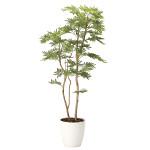 【送料無料】【2020年新商品】ねむの木1.6(ポリ製) (人工観葉植物) 高さ160cm 光触媒機能付 (2105A360)