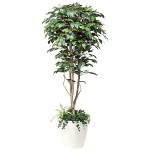 【2019年新商品】【送料無料】フィカスベンジャミン植栽付 1.8 (造花) 高さ180cm 光触媒 (508F500)