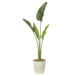【送料無料】オーガスタM1.6(ポリ製) (屋外用人工観葉植物) 高さ160cm ※光触媒ではありません (903A250)
