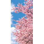 タペストリー(防炎)桜青空