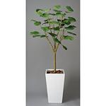 【送料無料】ウンベラータ ダブル (人工観葉植物) 高さ180cm 光触媒 (118A600)