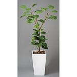 アートウンベラータ (人工観葉植物) 高さ180cm 光触媒 (120A500)