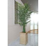 【送料無料】トロピカルアレカパーム (人工観葉植物) 高さ200cm 光触媒 (124B550)