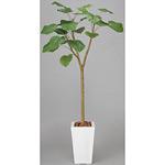【送料無料】ウンベラータ (人工観葉植物) 高さ170cm 光触媒 (128A400)