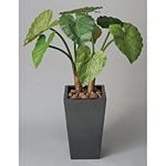 【送料無料】くわず芋 (人工観葉植物) 高さ90cm 光触媒 (130A350)
