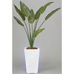 【送料無料】ストレチア (人工観葉植物) 高さ120cm 光触媒 (132A300)