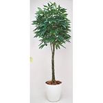 【送料無料】パキラ (人工観葉植物) 高さ200cm 光触媒 (140B580)