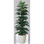 【送料無料】スプリットフィロ (人工観葉植物) 高さ180cm 光触媒 (143A350)