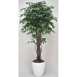【送料無料】ベンジャミンリアナ (人工観葉植物) 高さ180cm 光触媒 (152A480)